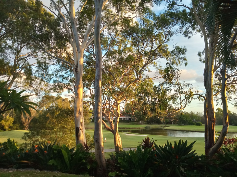A view of Noosa River