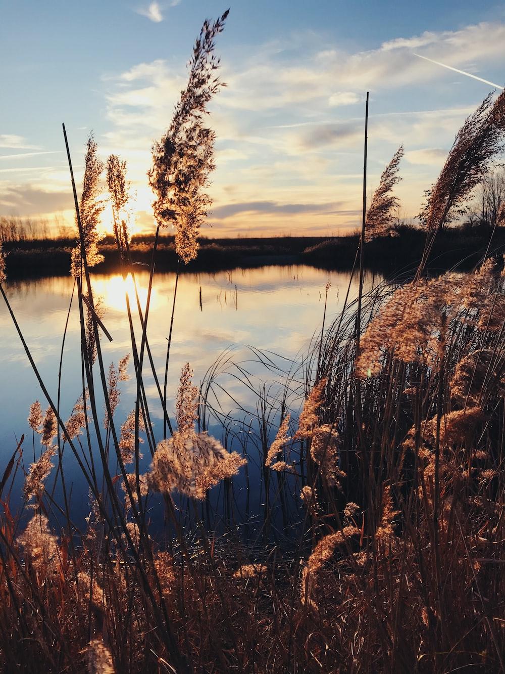 brown grass near lake during sunset