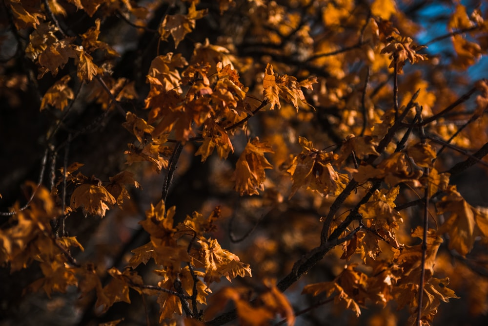 yellow leaves on brown tree branch