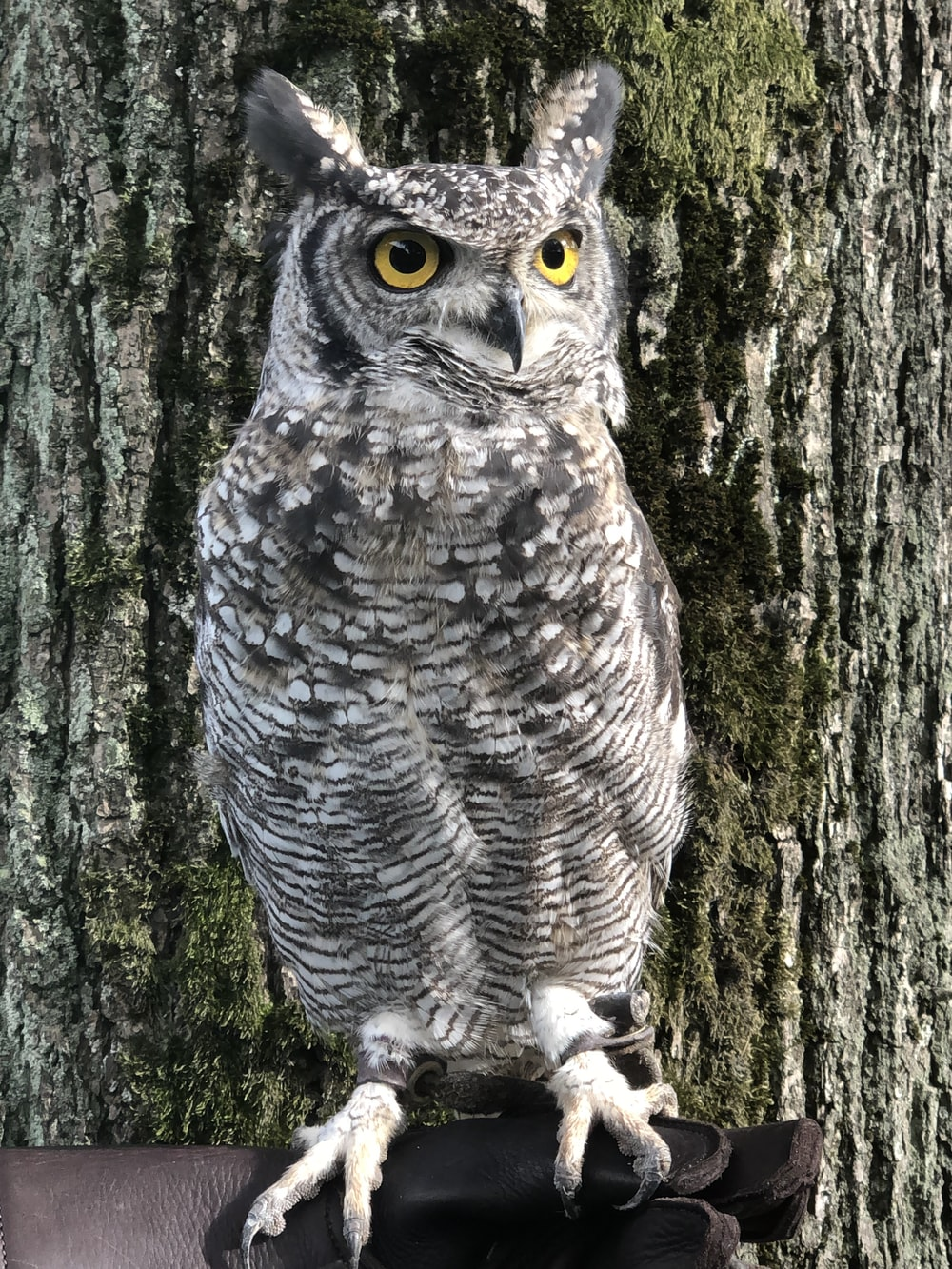 gray owl on tree trunk