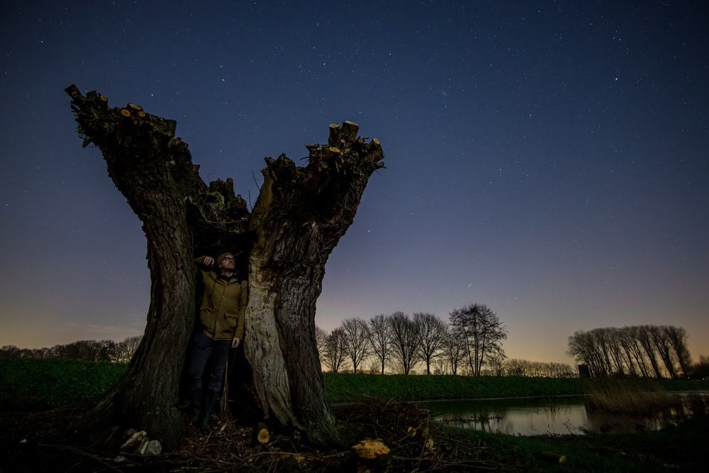 woman in blue jacket standing beside tree during night time
