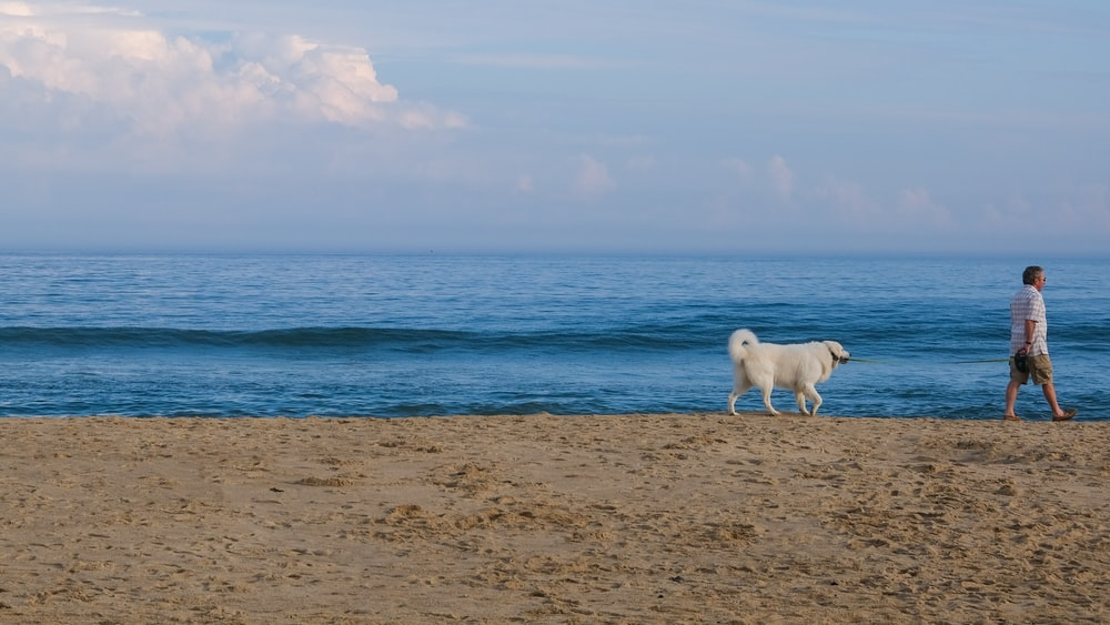 white horse on brown sand near body of water during daytime