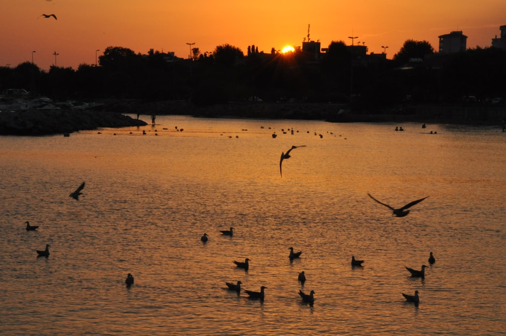 birds on beach during sunset