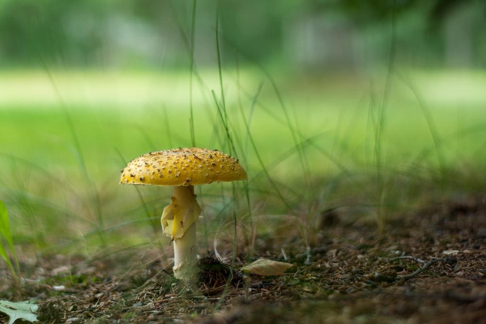 brown and white mushroom in tilt shift lens