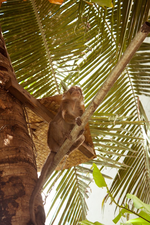 monkey on brown tree branch