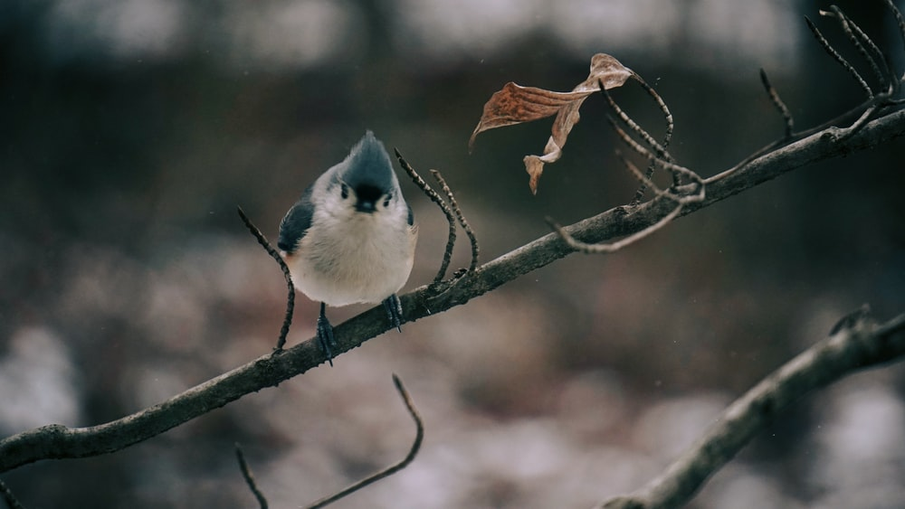 white and blue bird on brown tree branch