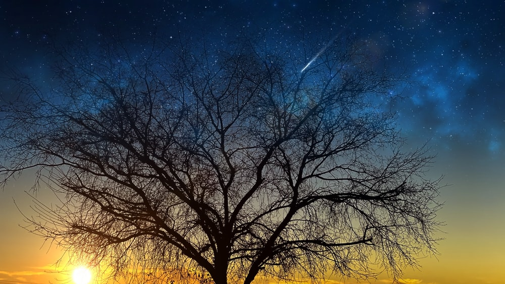 bare trees under blue sky during night time