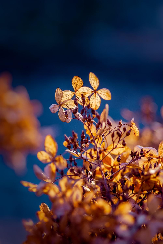 yellow leaves in tilt shift lens