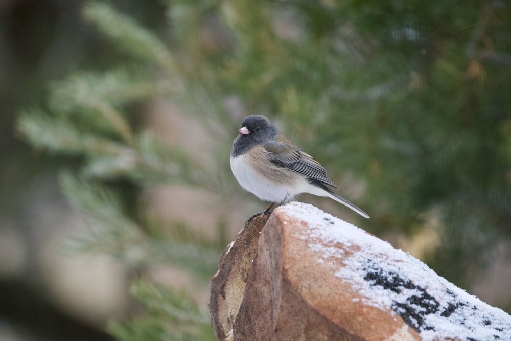 gray and white bird on brown rock