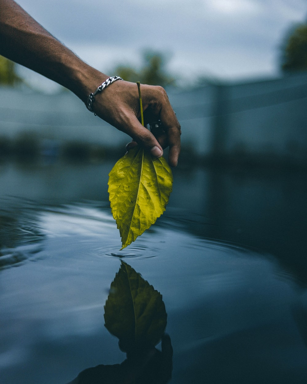 person holding yellow leaf on water