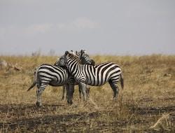 Serengeti National Park Pirschfahrt