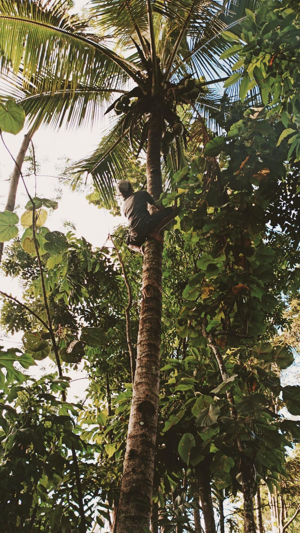 black bird on brown tree branch during daytime
