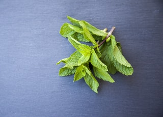 green leaves on gray textile