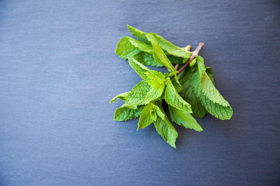 Mint, herb, herbs