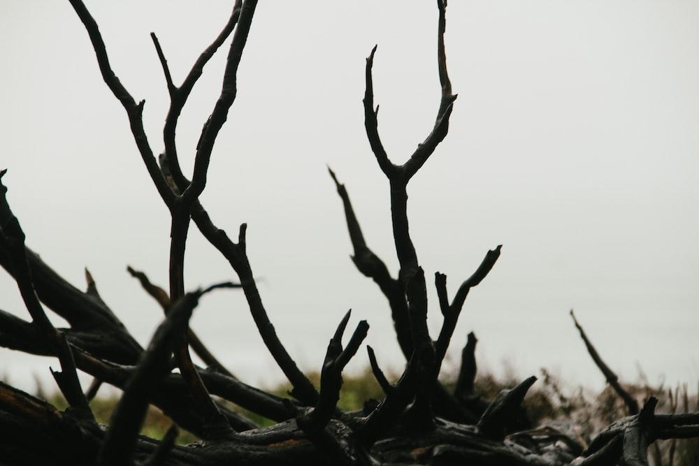 brown tree branch during daytime