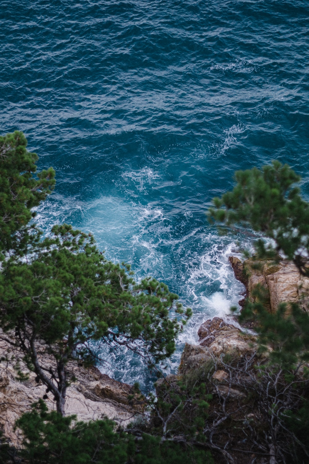 green trees beside blue sea during daytime