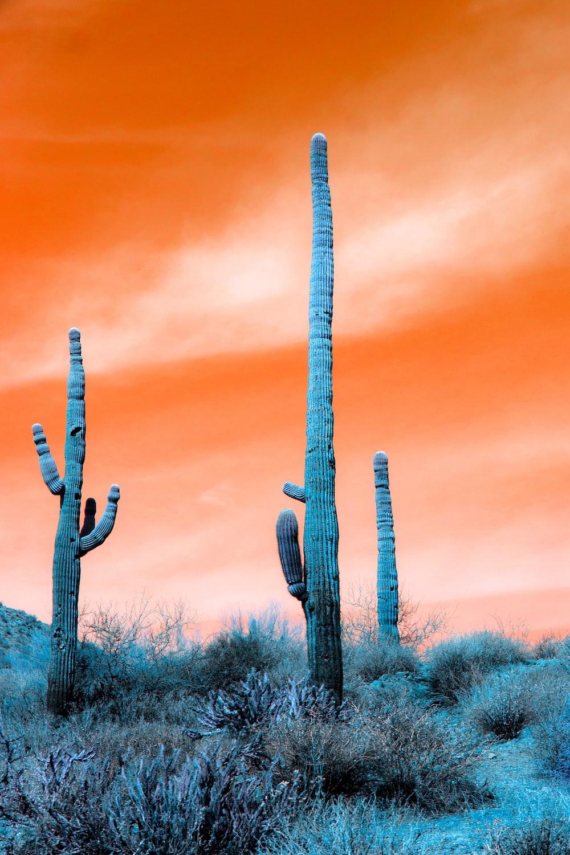 cactus plants under blue sky during daytime