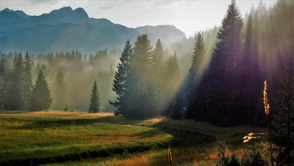 green grass field with trees and fog