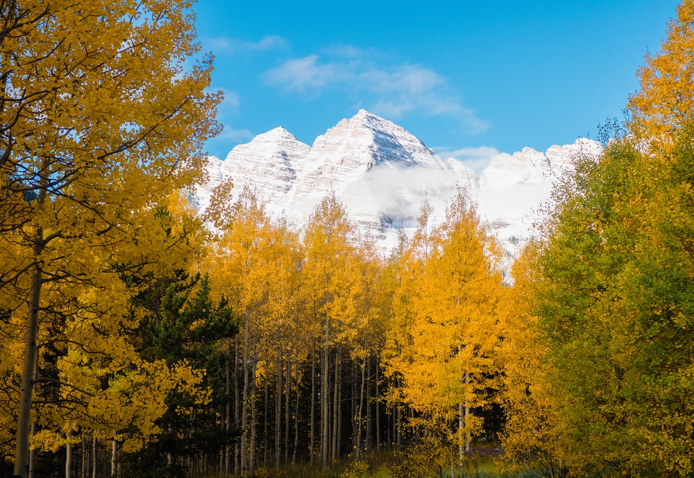 green and yellow trees near snow covered mountain during daytime