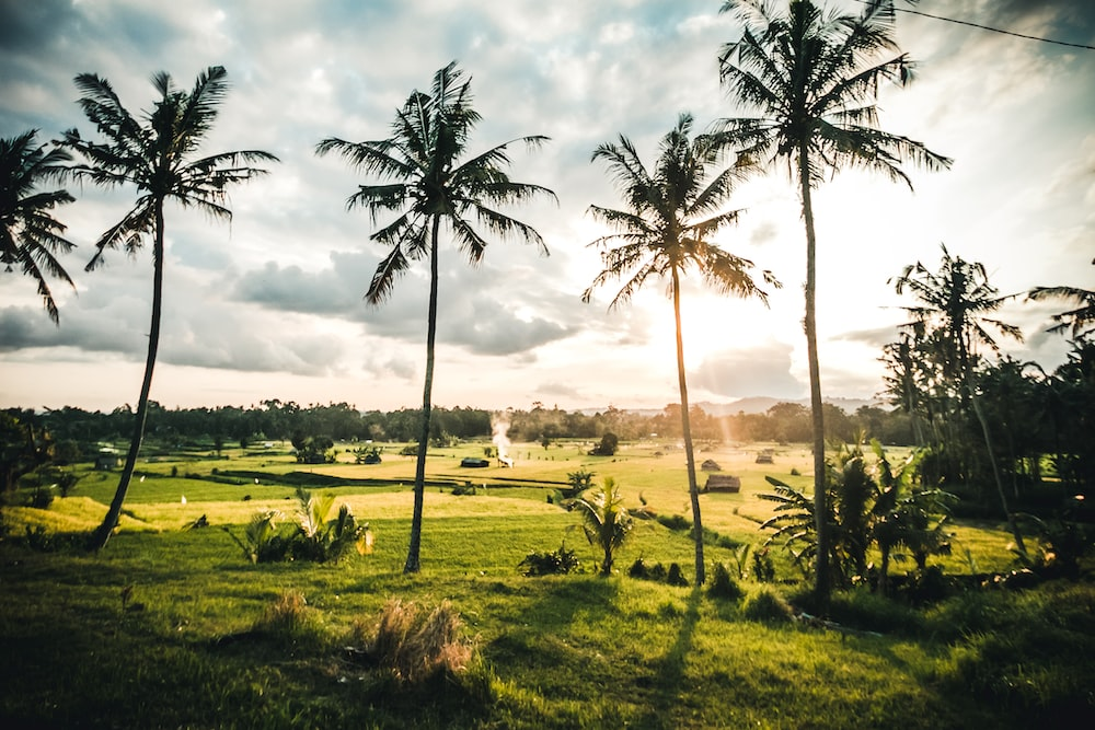 green grass field with coconut trees under white clouds during daytime