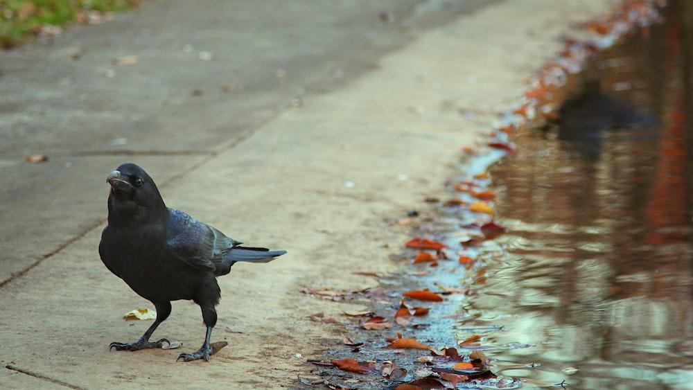 black bird on gray concrete floor