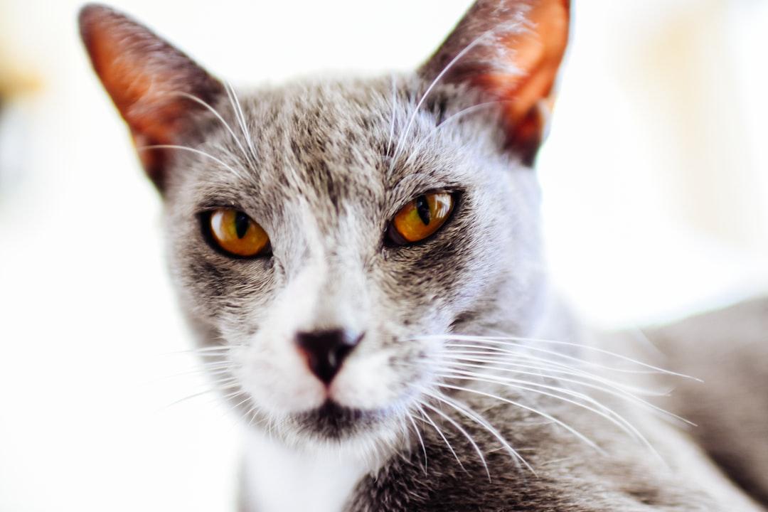 Beautiful Pet