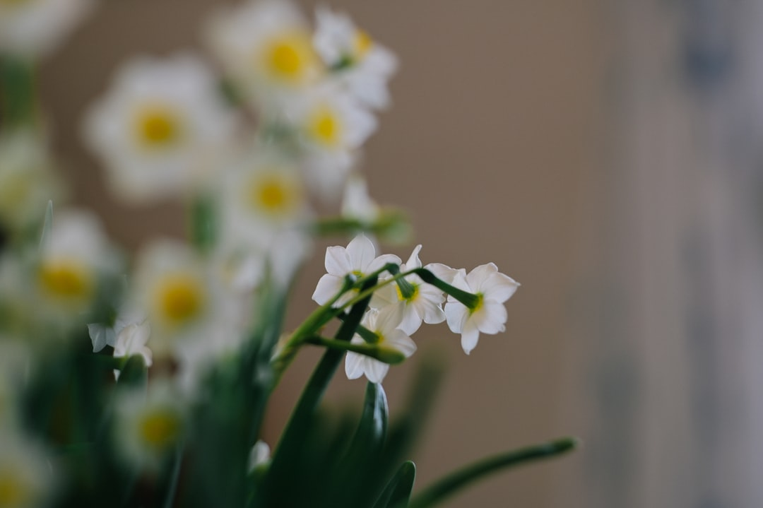 White and Yellow Flowers In Tilt Shift Lens - unsplash