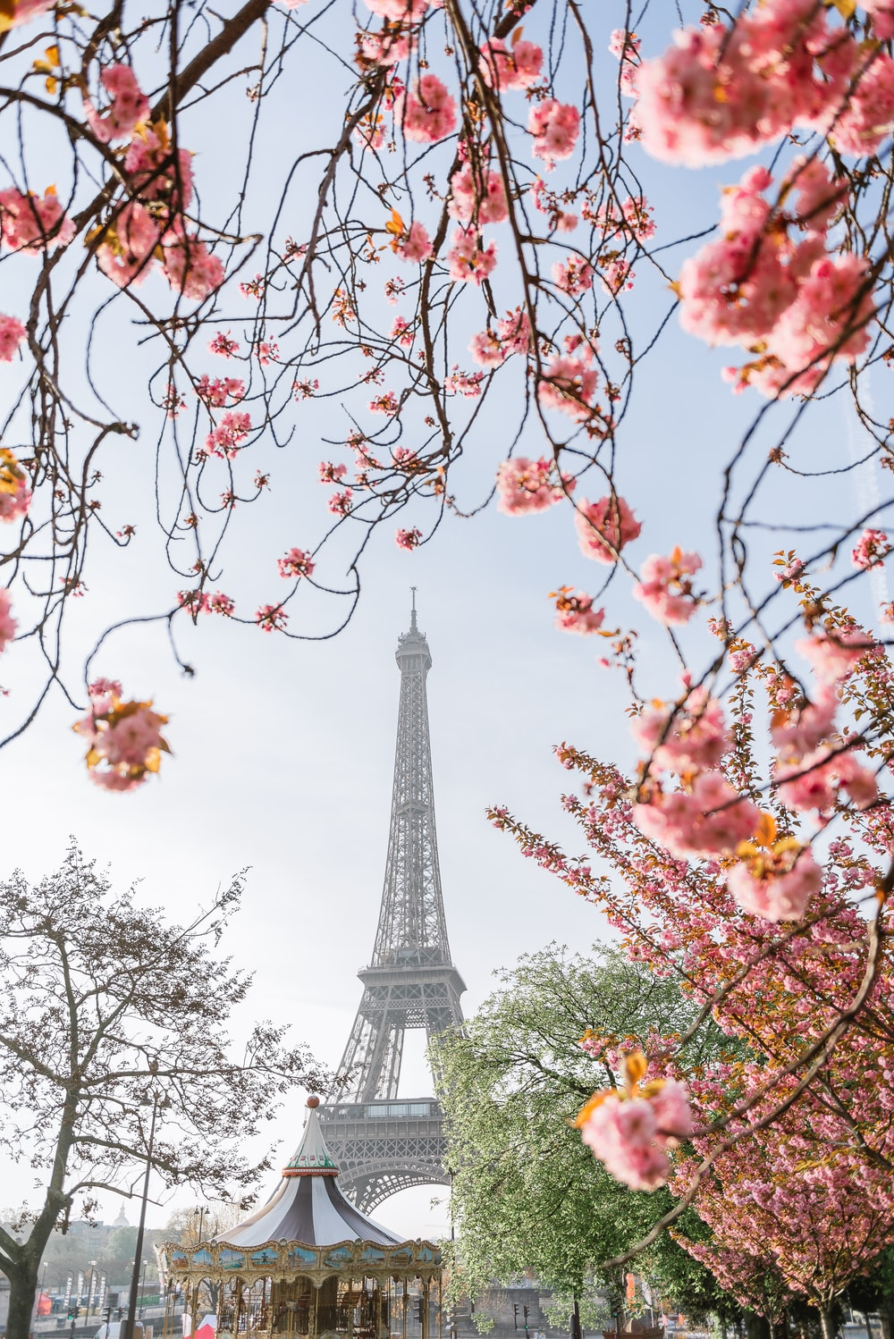 pink and white flowers near eiffel tower during daytime