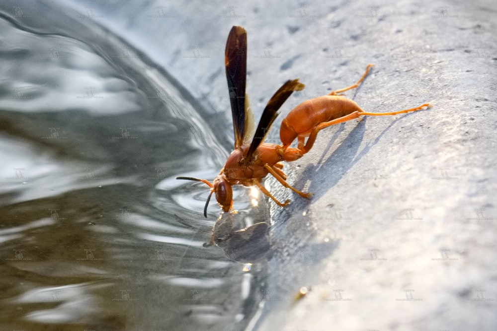 brown and black insect on water