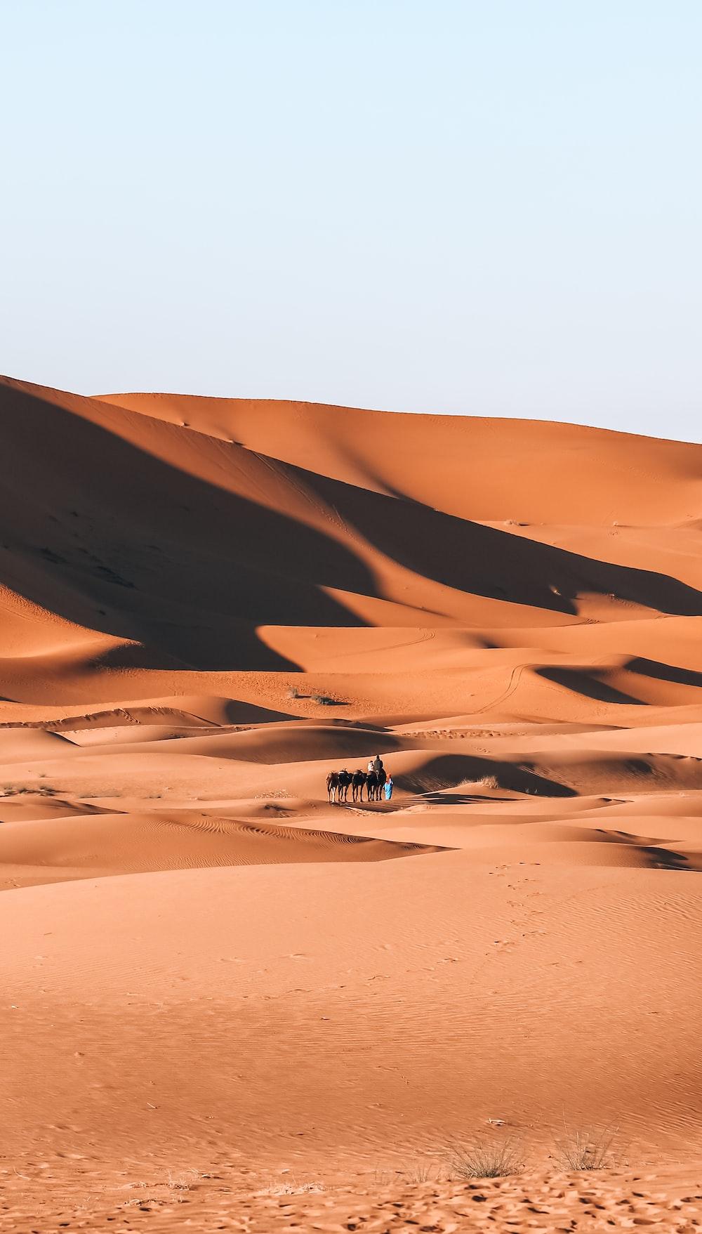 white and brown desert under blue sky during daytime