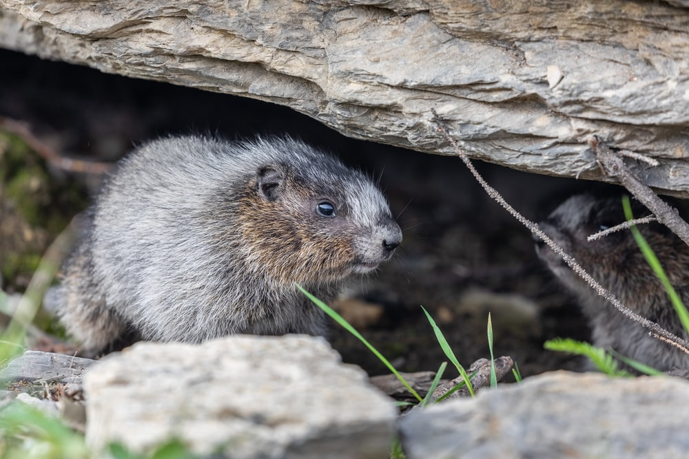 gray rodent on brown rock during daytime