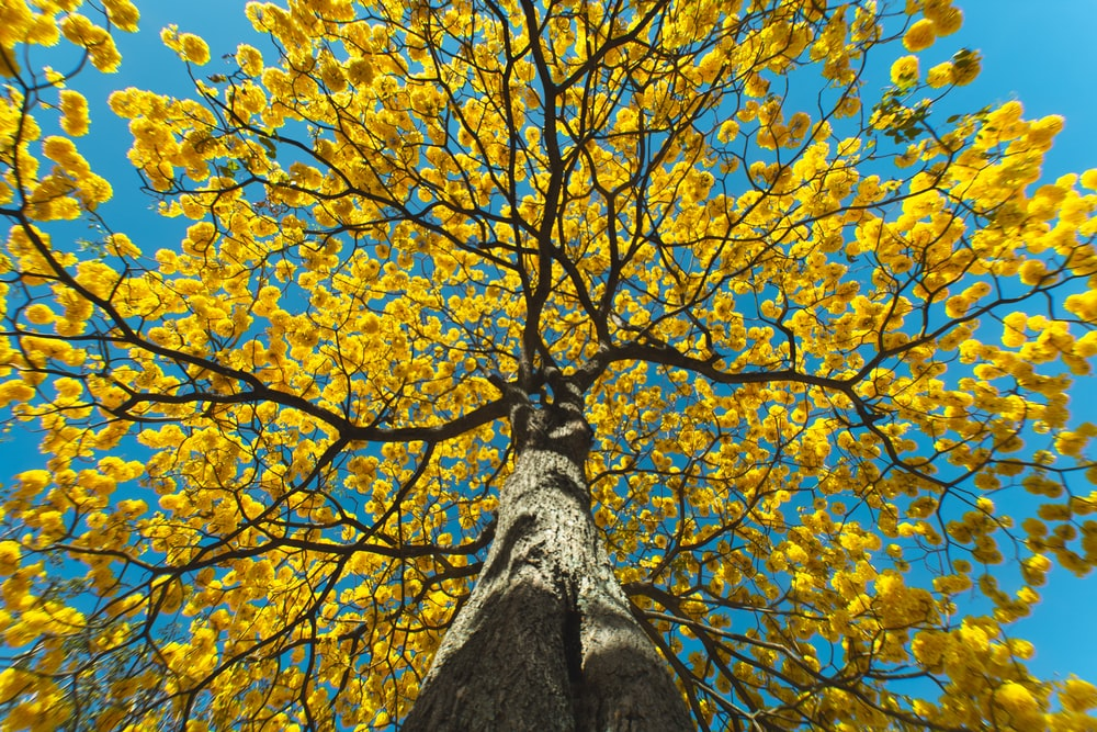 low angle photography of brown tree