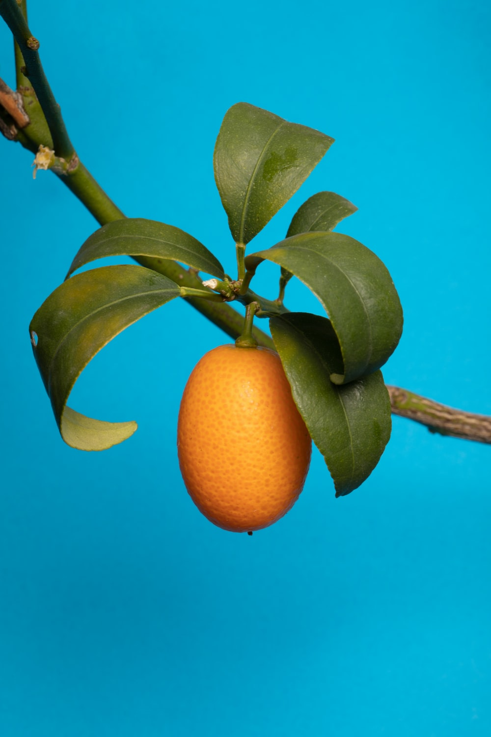 orange fruit on tree branch