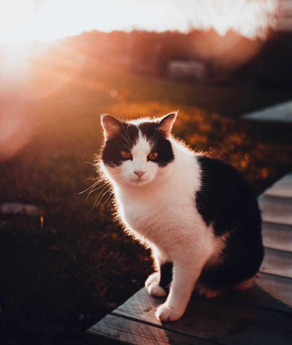 Black And White Cat Pictures Download Free Images On Unsplash
