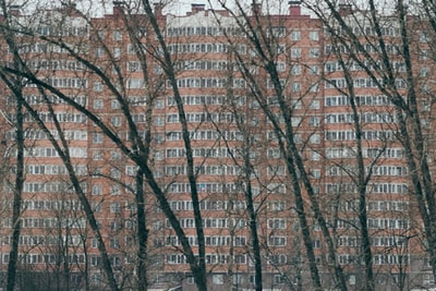 bare trees near brown concrete building during daytime