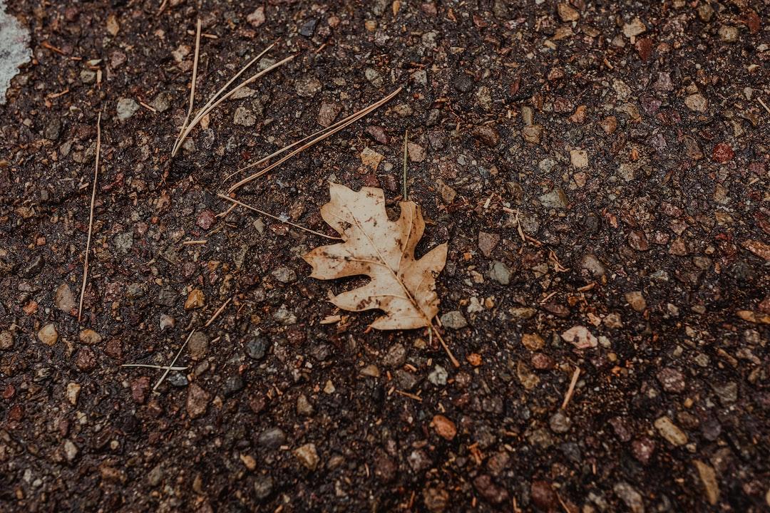 Leaf, antum,