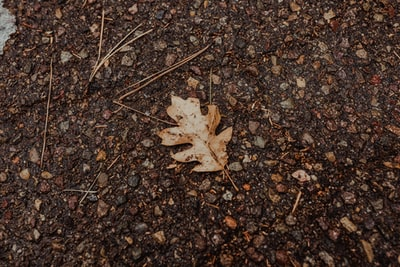 brown maple leaf on brown and black marble surface ground zoom background
