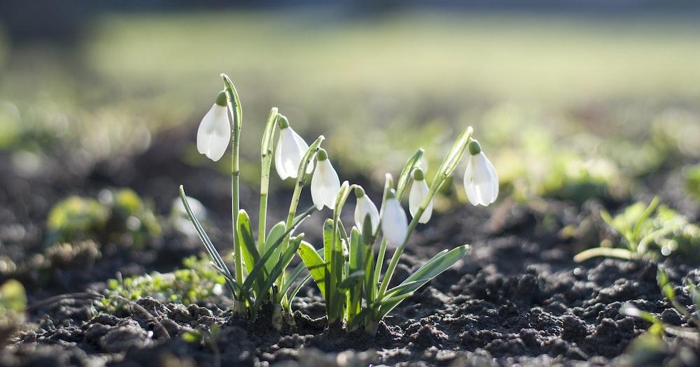 white flowers on black soil