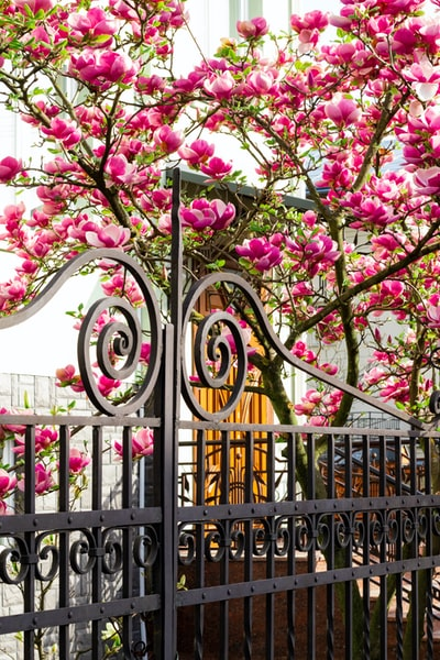 pink and white flowers on black metal fence