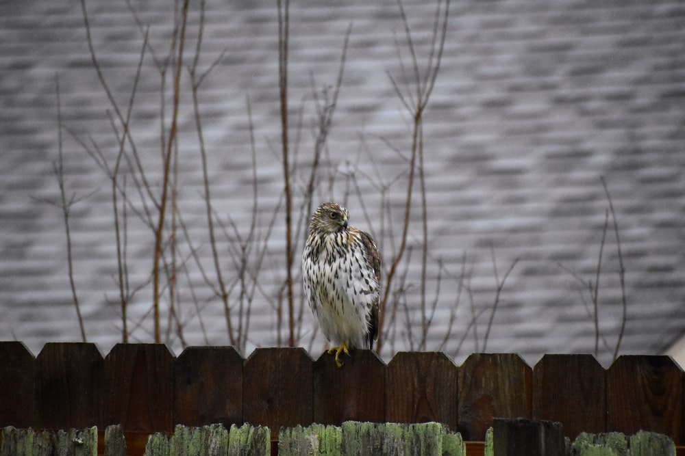 white and brown owl on brown wooden fence during daytime