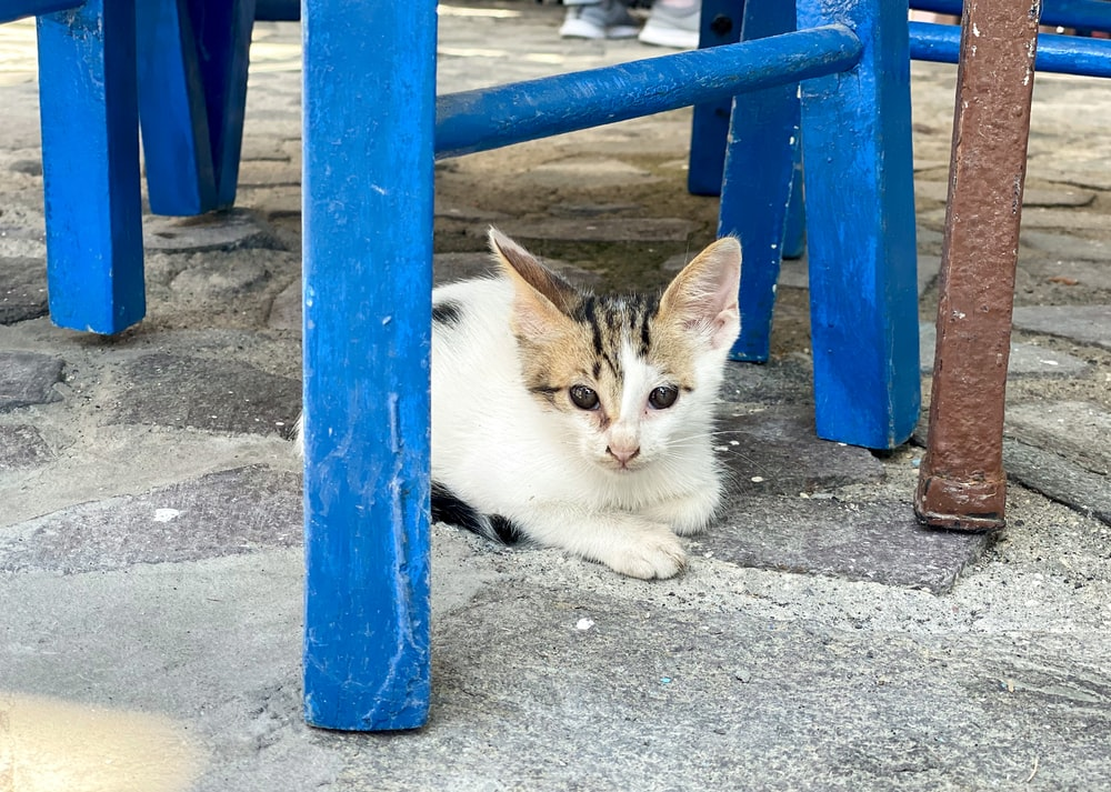 white and brown cat lying on blue metal fence