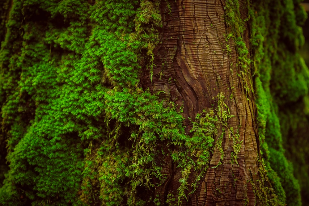 brown and green tree trunk