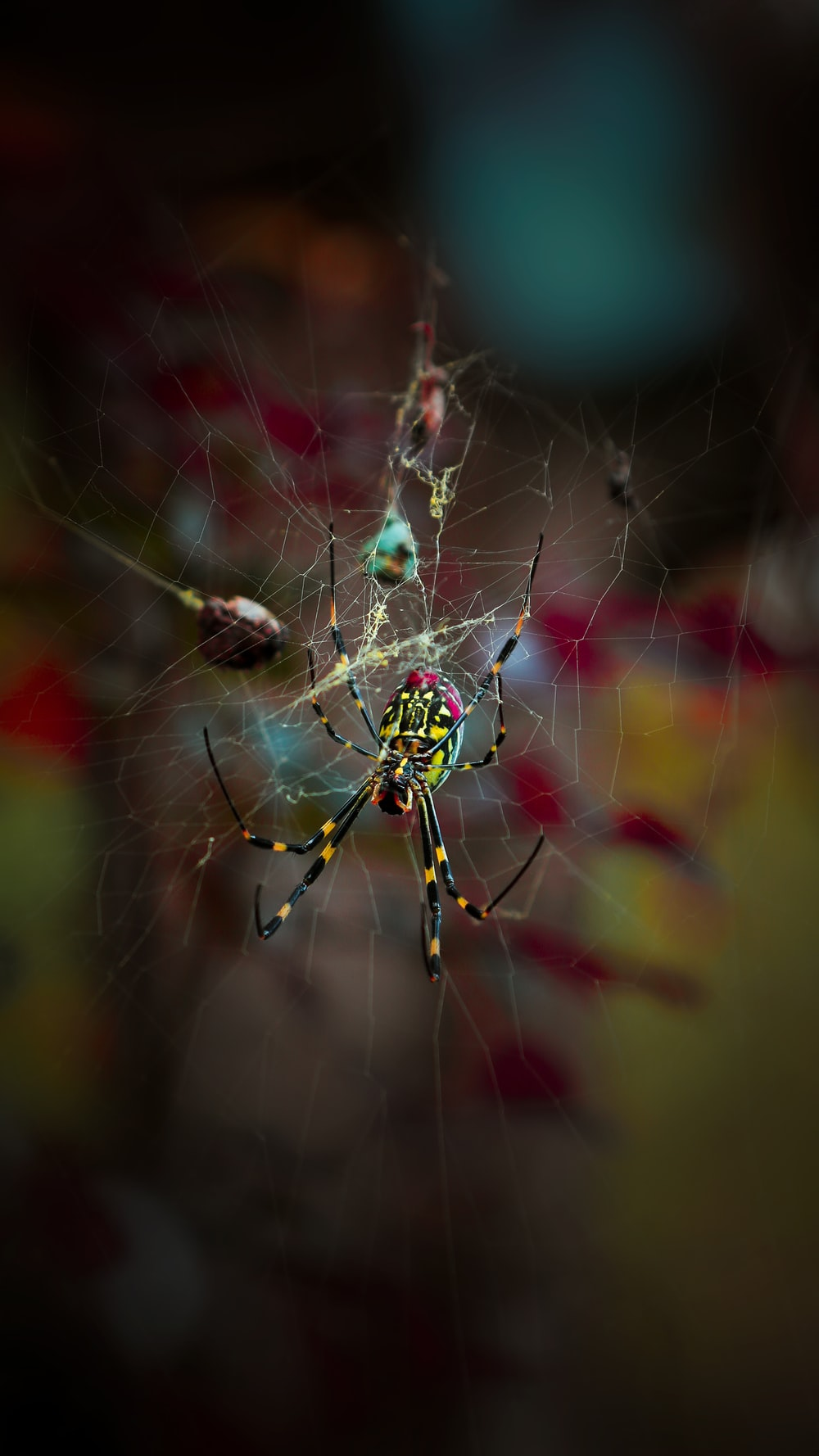 green and yellow spider on web in close up photography during daytime