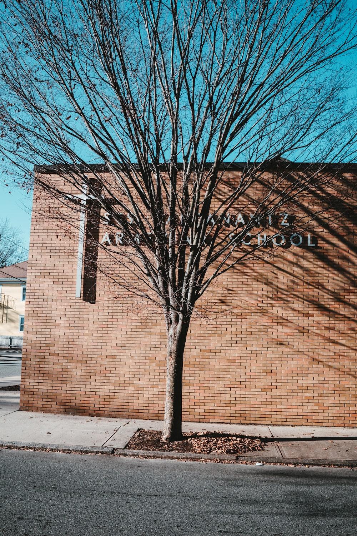 bare tree beside brown brick building