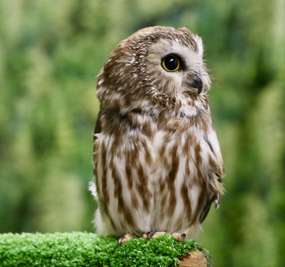 brown owl on green grass during daytime