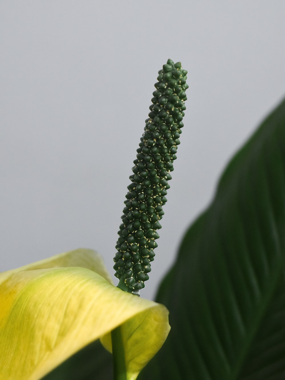 green cactus plant beside yellow flower