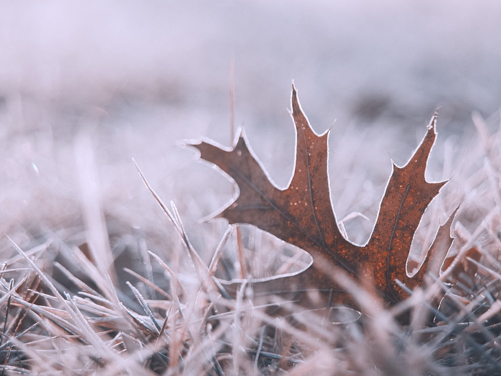 brown dried leaf on brown grass