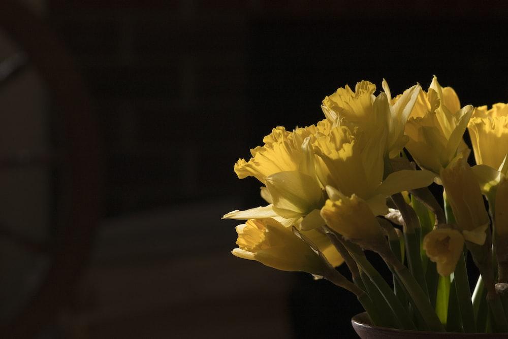 yellow flower in brown ceramic vase