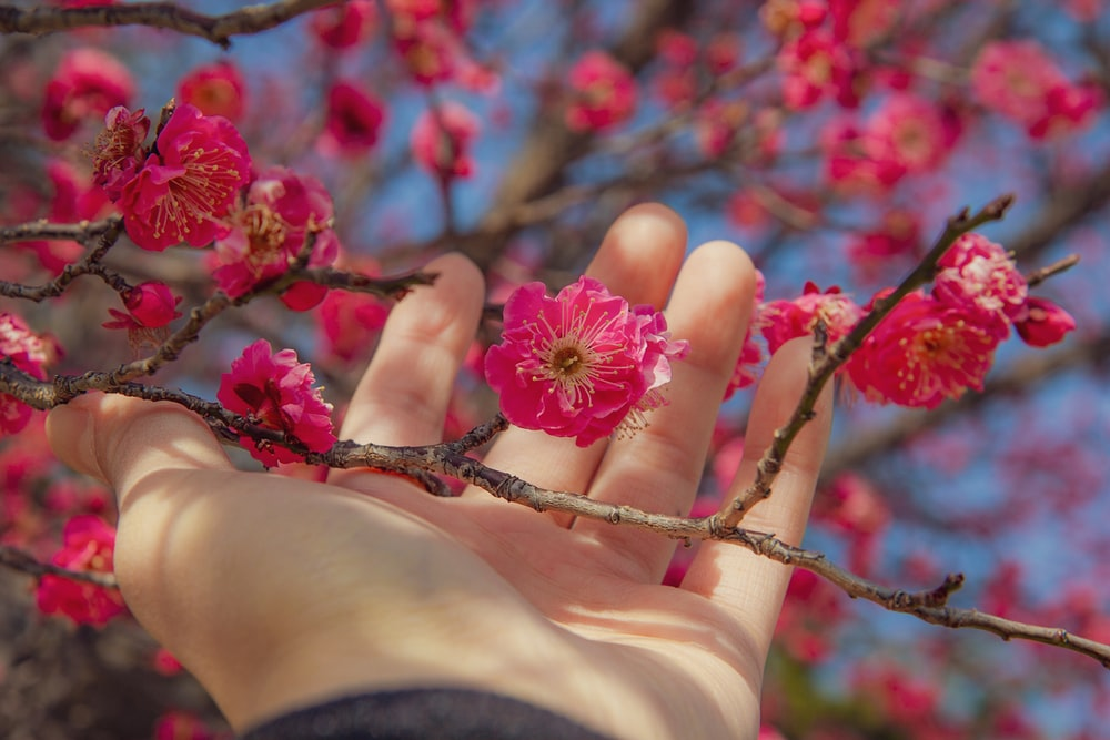 pink flower on persons hand