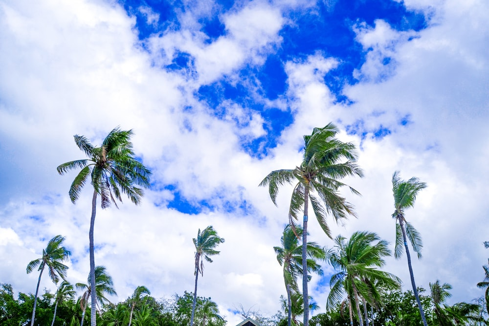 green coconut trees under blue sky and white clouds during daytime
